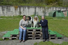 Family (DanielOssino_EducatoreCinofilo) Tags: family dog cute dogs cane collie sweet famiglia cutie erba dolce together lovely insieme prato amore cani