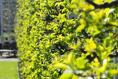 Spring in Copenhagen (Aleksander Rosenkilde Kristiansen) Tags: flowers light summer green copenhagen garden denmark happy daylight day kogenshave