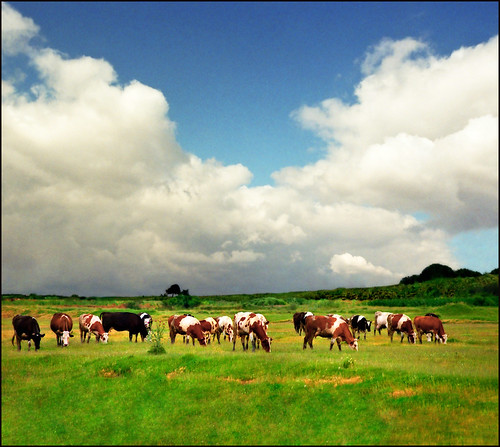 Life on the pasture