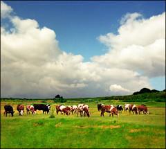Life on the pasture (Katarina 2353) Tags: film field landscape spring nikon serbia srbija katarinastefanovic katarina2353