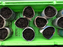 The beginning (What I saw...) Tags: vegetables paper seeds pots seedlings