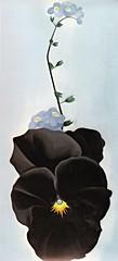 Black Pansy & Forget-Me-Nots, 2013 Georgia O'Keefe Calendar (ali eminov) Tags: flowers paintings painters calendars georgiaokeefe forgetmenots blackpansy blackpansyforgetmenots