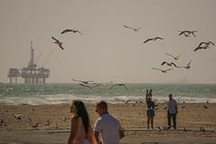 Feeding the Birds (Jose Matutina) Tags: ocean california sea seagulls beach water waves pacific feeding gulls orangecounty sands huntingtonbeach sel55210 sonya6000