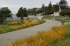 The boardwalk (Karen Pincott) Tags: autumn newzealand plants walkway grasses napier hawkesbay eveninglight lateafternoon cycleway ahuriri