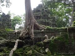 Ta Prohm Temple, Angkor, Cambodia. (TGphotoman) Tags: travel tree cambodia explore angkor tombraider indianajones