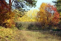 DSC_6032 (Rustam Bikbov) Tags: autumn september 2012    sverdlovskoblast