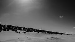 (114/366) Duinen Ameland (141/365) (MJ Klaver) Tags: blackandwhite nature zwartwit nederland noordzee photoaday ameland duinen kust project365 project366 lx100 day114366 366the2016edition 3662016 23apr16