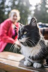 Kot z Markowych Szczawin (PanMajster) Tags: blur mountains cat pentax bokeh sigma kot k5 1835 babia gra schronisko markowe szczawiny