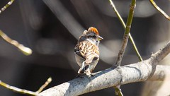840A3042 (rpealit) Tags: tree bird nature river scenery wildlife trail national american sparrow waters winding refuge wallkill