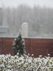 and so we woke up in a Winter Wonderland (Landanna) Tags: winterwonderland mayspringstartsoon