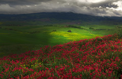 Leaving Volterra (Robyn Hooz) Tags: flowers italy storm clouds nuvole volterra val fiori toscana colza trifoglio delsa cloverfields