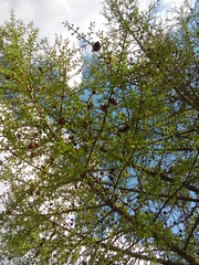 20160424_153407 (g0d4ather) Tags: park trees sky nature clouds daylight spring nobody larch