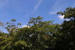 Ibirapuera - SP (quanaval_sp) Tags: landscape sopaulo paisagem sampa sp ibirapuera alesp assembleialegislativa