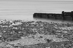 Ghost Bird (adrianwoolgar) Tags: sea blackandwhite bw beach water stone sussex worthing seagull ghost groyne groin