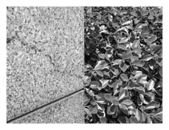(Gene Daly) Tags: newyorkcity blackwhite genedaly olympusem5 olympusmzuikodigital17mmf18 pp424025