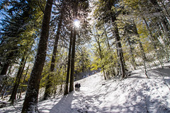 monumentals trees (Fabio Ghelfi) Tags: friends wild sky snow nature canon rocks wind sigma adventure toscana topoftheworld appennino abetone 100d