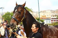(atrialbyfire) Tags: horses horse napoli naples cavalli cavallo stallone varenne ilcapitano agnano purosangue