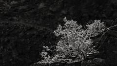 P.S.-16-445 (schmikeymikey1) Tags: bw plants rock landscape bush path style backlit
