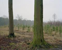 (Daniel.Bruns) Tags: tree nature forest kodak trunk 4x5 chamonix portra 160