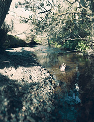 Drowning. (Elliot Tratt) Tags: light summer nature water rock digital canon river dark lost eos death hands cornwall dof hand darkness natural edited depthoffield rivers waters concept conceptual dying waterline drowning drown edit depressing concepts 2016 brenizer 400d