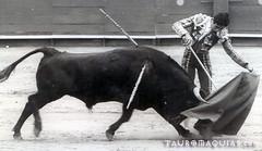 Pase natural de Jos Antonio Campuzano en Lima (Vladimir Tern A.) Tags: blancoynegro bulls toros animales costumbres bullfighting bullfighters tauromaquia tradiciones corridas toreros matadores feriataurina culturayarte