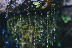 DSC04411 (Benjamin Ling Photography) Tags: plants nature water rock gardens digital forest 35mm lens photography moss bokeh sony botanic canberra algae portra fee whacking preset t15 samyang a7s