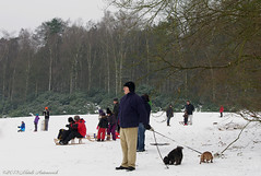 Winter (Natali Antonovich) Tags: park christmas family winter friends portrait dog snow nature animals frost mood belgium belgique belgie lifestyle tradition relaxation sled sleding sledging lahulpe romanticism christmasholidays