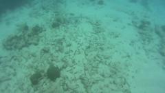 pennekamp_08 (ericvdb) Tags: statepark snorkeling floridakeys keylargo johnpennekamp