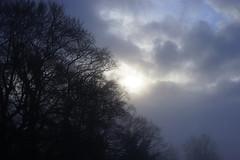 Misty morning light (Jenny.Lawrence) Tags: morning light silhouette misty sunrise foggy 365project 366project