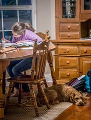 Loyal companion (ana's pix) Tags: dog kids terrier homework irishterrier companion loyal