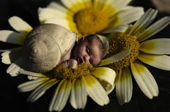 caracol (titopamies) Tags: flores pentax niña bebe edition caracol