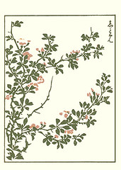 Chinese quince (Japanese Flower and Bird Art) Tags: flower art japan japanese book chinese picture nagasaki woodblock quince chaenomeles rosaceae speciosa masayoshi kitao readercollection
