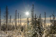 2016 Frozen (jeho75) Tags: winter zeiss germany deutschland nationalpark sony harz ilce 7m2