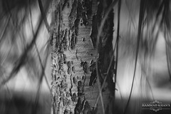 Wearing Off!! (Hammad Khan's Photography) Tags: old trees blackandwhite blur macro tree nature grey woods nikon flickr dof bokeh shades trunk karachi flickrworld nikonphotography d7100 flickrpakistan nikond7100