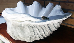 Grey Giant Clam Shell SINK 4 (LittleGems AR) Tags: ocean sea sculpture sun beach home statue giant bathroom shower aquarium soap sand bath sink natural contemporary unique decorative shell craft style toilet towel clam basin special shampoo taps wash ornament gift seashell pearl nautical reef decor spa luxury opulent fossils oneoff clamshell mollusks cloakroom bespoke tridacna sculpt crafted gigas facetowel