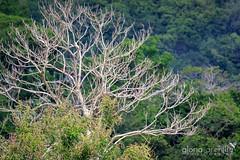 PaisajeEA5A1788 (Gloria Archilla) Tags: birds puertorico aves lasramblas canon7d gloriaarchilla