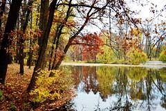 Autumn landscape 2 (dan_m_gh@yahoo.com) Tags: autumn wetland daarklands