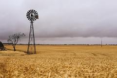 Watching the rains roll in (dualiti.net) Tags: travel windmill barley rain clouds rural canon photography scenery farm country farming grain australia fields peninsula southaustralia yorke 6d
