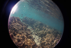 Under the sea (Alveart) Tags: pacific panama pacifico centroamerica centralamericaoceansnorkelinglomofisheyelomographyunderthewater