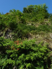 Calderawand; Bali, Batur, Indonesien (1) (Chironius) Tags: trees bali tree indonesia rboles boom arbres rbol albero bume arbre rvore baum trd indonesien batur aa