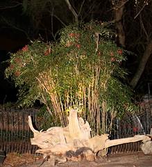 IMG_6254 (jalexartis) Tags: lighting nightphotography night dark landscaping nandina nandinadomestica