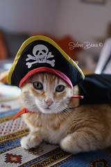 Il pirata dei Caraibi (Guarda Nuvole) Tags: pet cats love animals cat ginger amazing kitten funny chat sony gato truelove gatto amore katzen gatti animali ernesto gattina gattino gati buffo gattini gattone amorevero sonya77 sonya77ii stefaniabesca