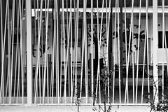 8 - Alfortville Ecole Pierre Brgovoy Entre (melina1965) Tags: blackandwhite bw nikon ledefrance noiretblanc faades february faade fvrier valdemarne 2016 alfortville d80 photoscape