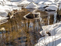 Down By The Water_13167 (smack53) Tags: trees winter snow water canon reflections newjersey stream powershot wintertime ringwood g12 ringwoodstatepark smack53