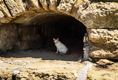 file_3264x2176_003033 (Ricymar Photography (Thanks to all the fans!!!!)) Tags: wallpaper nature landscape creta crete sonydslr isladecreta islandofgreece islandofcrete