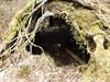 Fallen tree 'cave' (Mullica) Tags: park storm tree nature fallen swamp damage cave hollow parvin