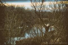 Wild swans (freshandfun) Tags: blue trees sunset nature water swan serbia orrange vojvodina cannal banat zrenjanin