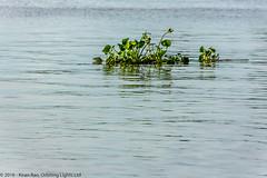 Mekong Delta, Vietnam (OrbitingLights) Tags: long delta vietnam be cai mekong vinh