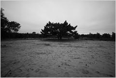 enjoy the silence (kceuppens) Tags: blackandwhite bw white black tree nature landscape nikon alone belgium zwartwit outdoor natuur boom le lone antwerp nikkor antwerpen buiten heide zw eenzaam kalmthout 1635 d810 leefilters nikond810 nikkor1635f4vr