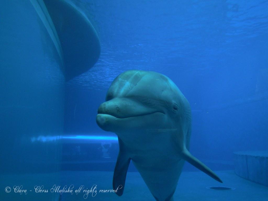 cetacea liguria - photo#45